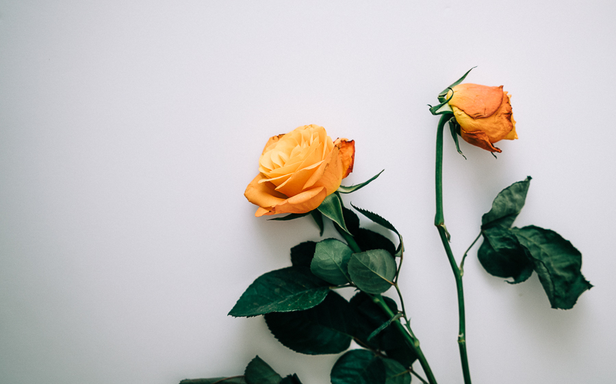 WEB Orange roses-2.jpg