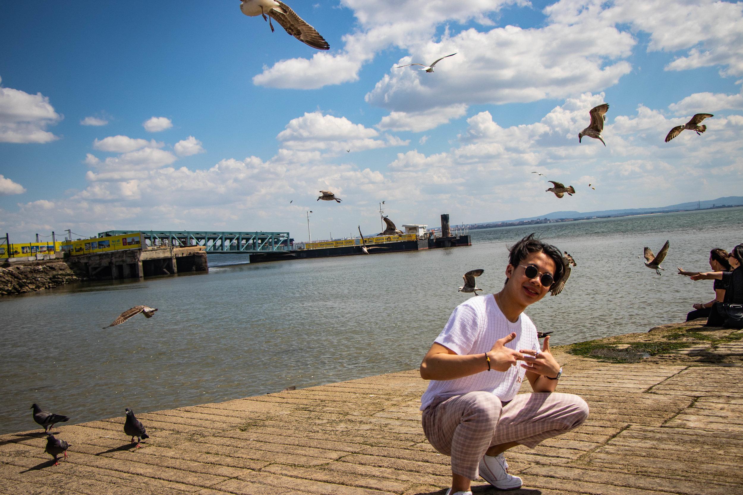 On Gull  Nick Wong