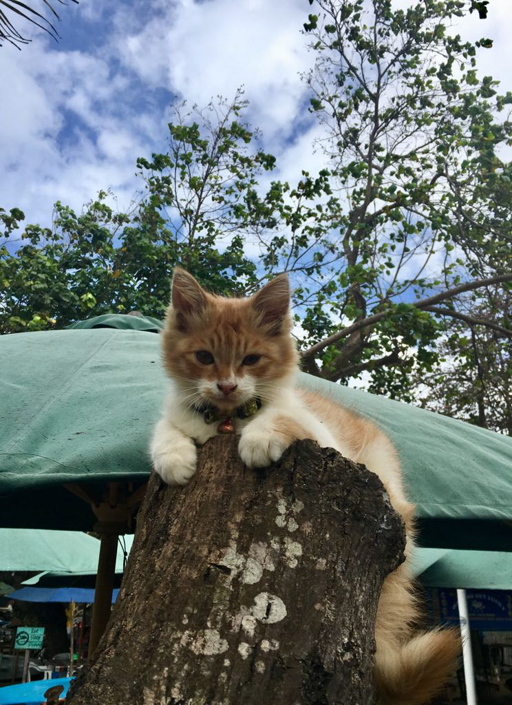 A very pretty Indonesian street kitten which was born in the back of a restaurant on the beach (very hygienically, I hope...). Whilst I was in Bali there were six earthquakes, two of very high magnitudes, and I always hoped these little kittens were okay.  Liliana Hennessey