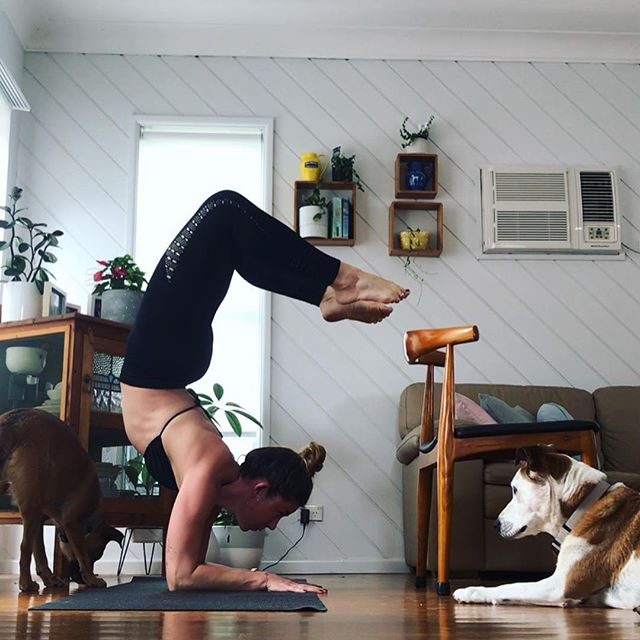 Providing solid entertainment to canine companions and working on scorpion pose #fryday