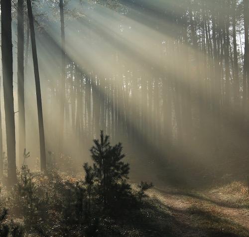 Méditation_de_forêt_Chi_Rvers_Genève_Suisse.jpg