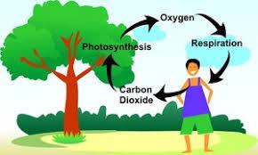 Oxygen-cycle_1.jpg