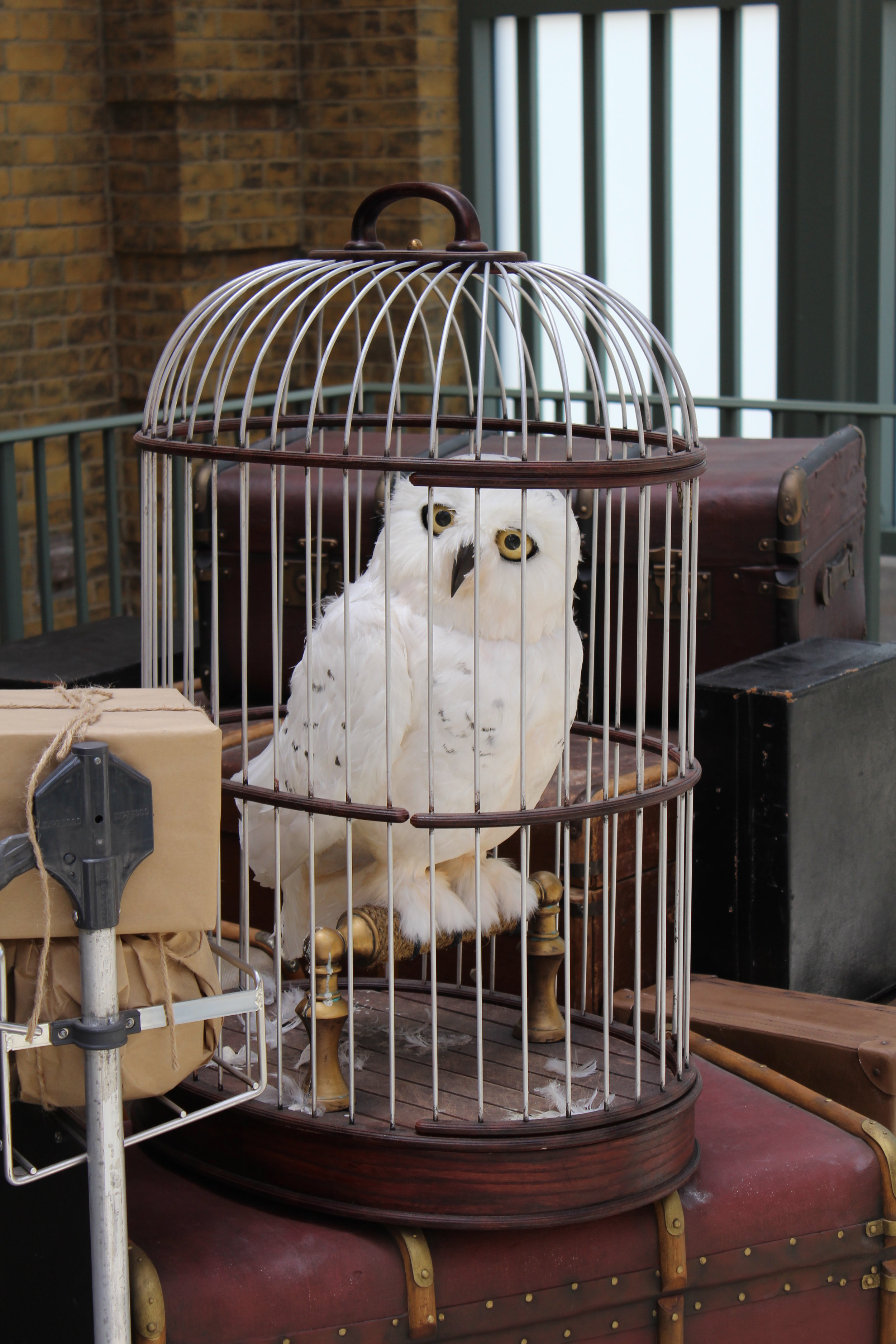 12- Snowy in Cage.JPG