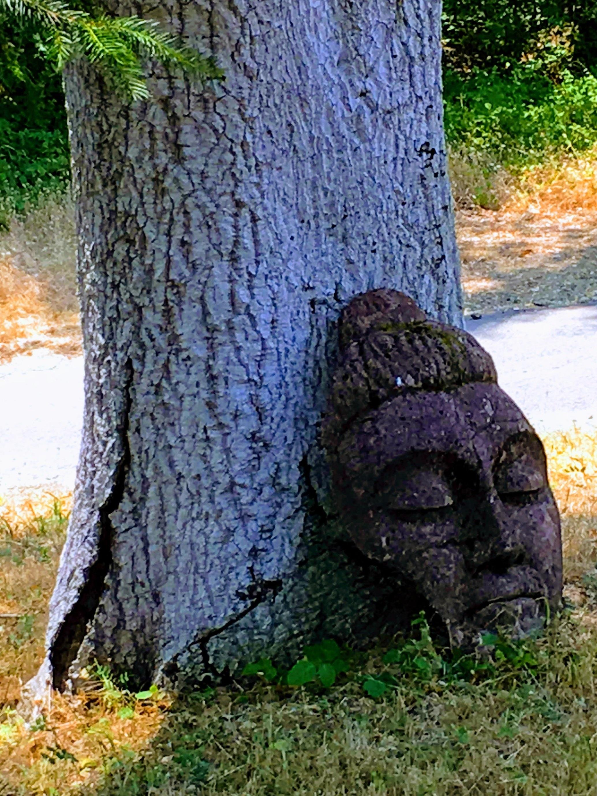 buddha+tree.jpg