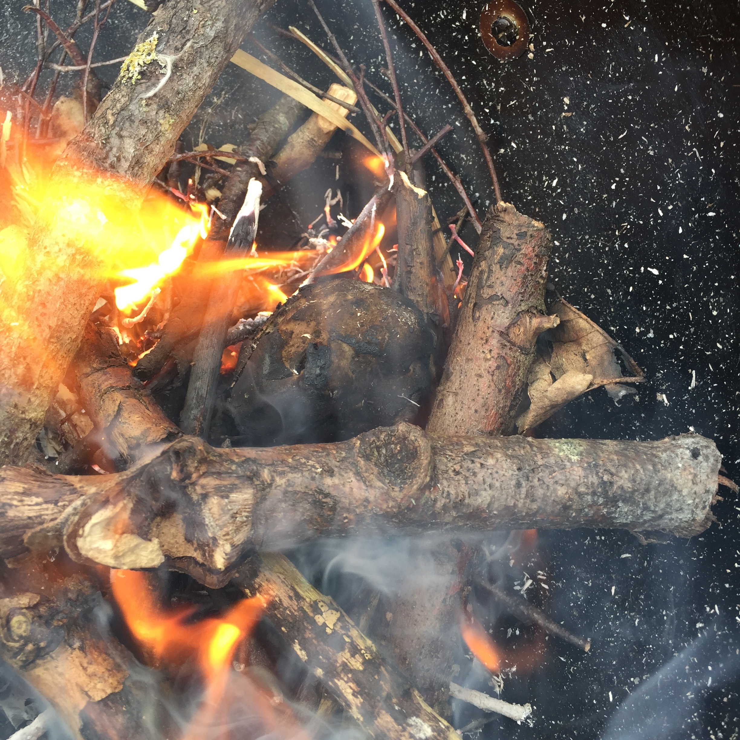 The fungus is the round black lump that looks a bit like coal in the centre of the fire.