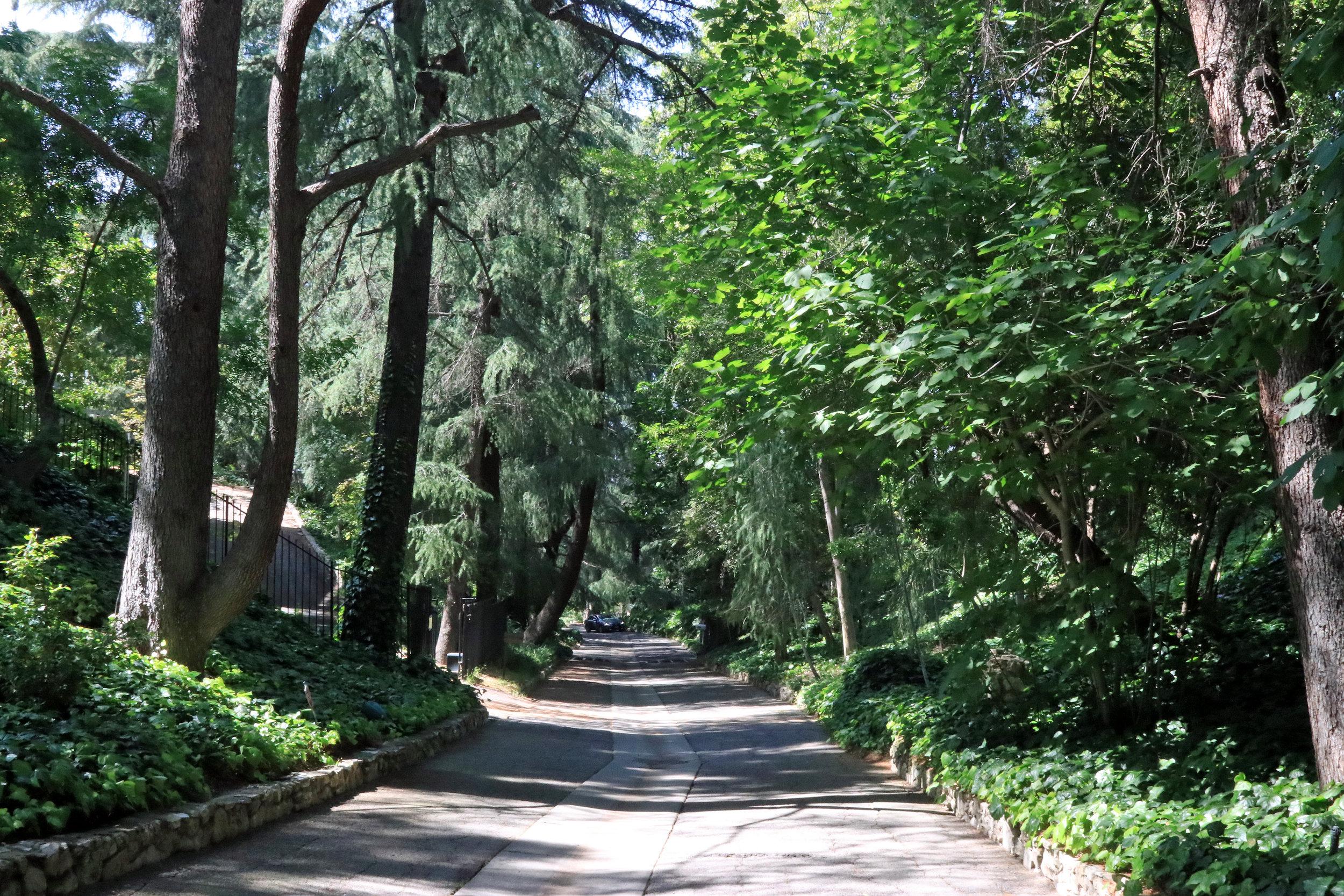 Deodar Lane in the Forest Hills Neighborhood