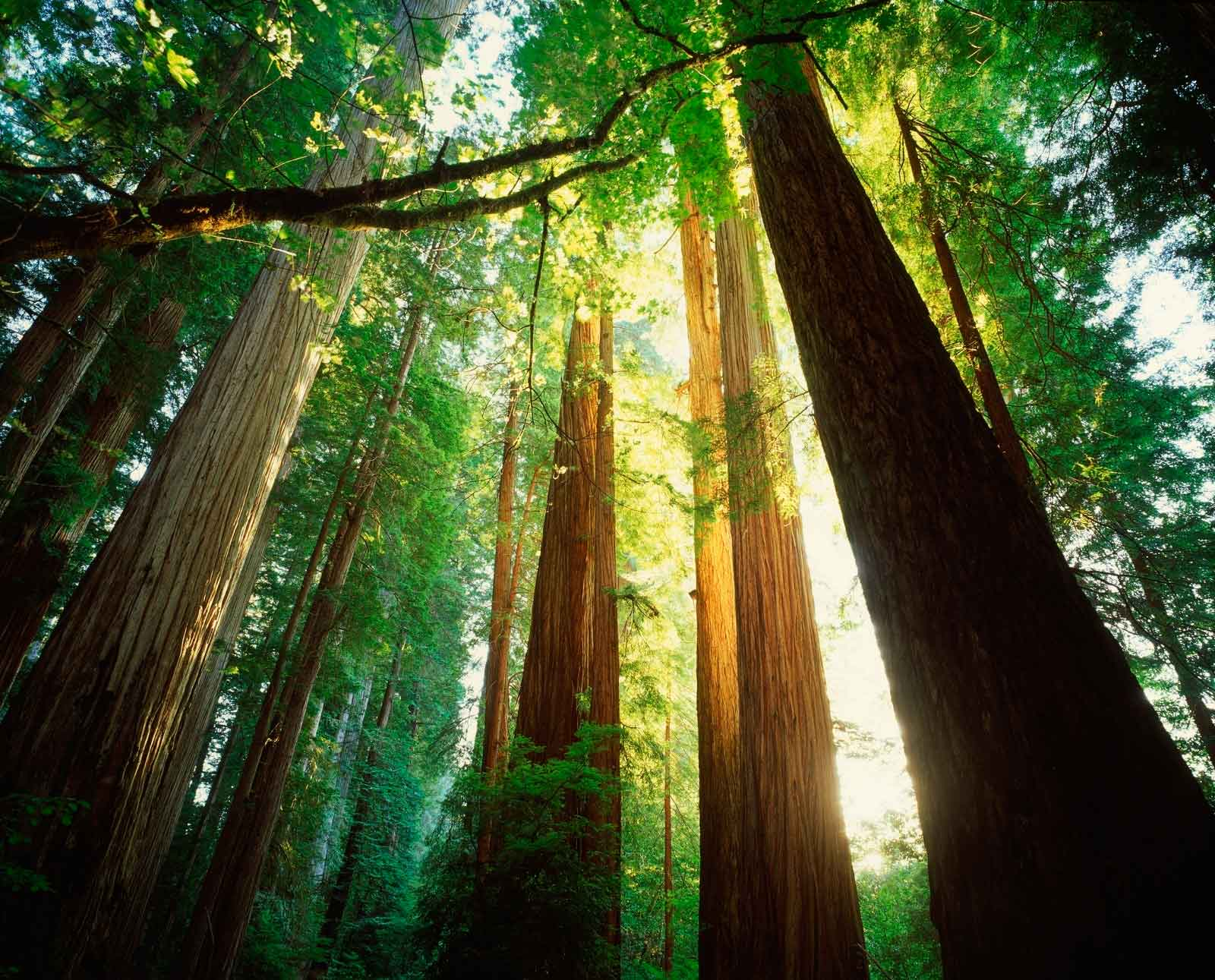 E VIP tours redwood.jpg