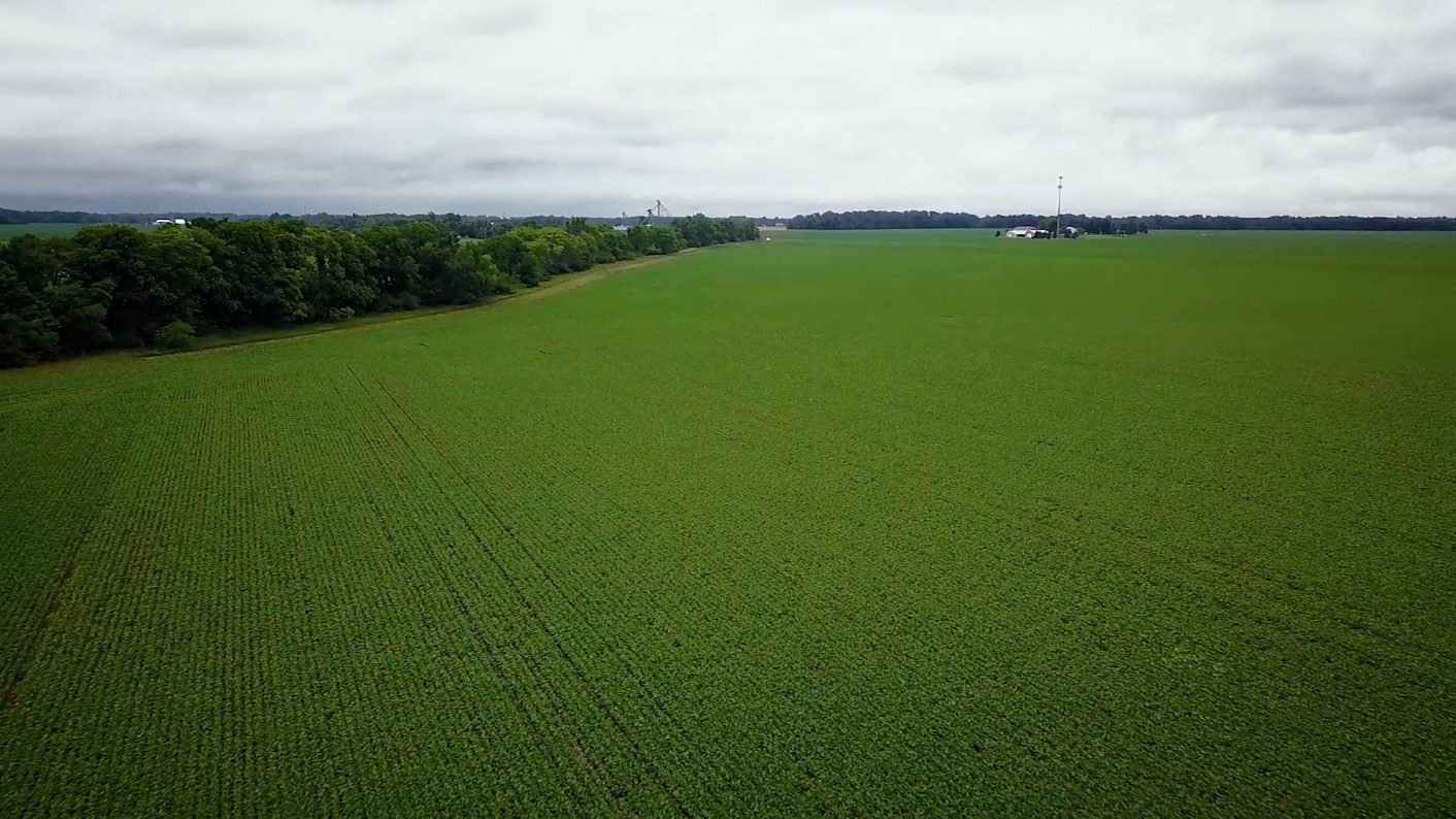 Corn field aerial.jpg