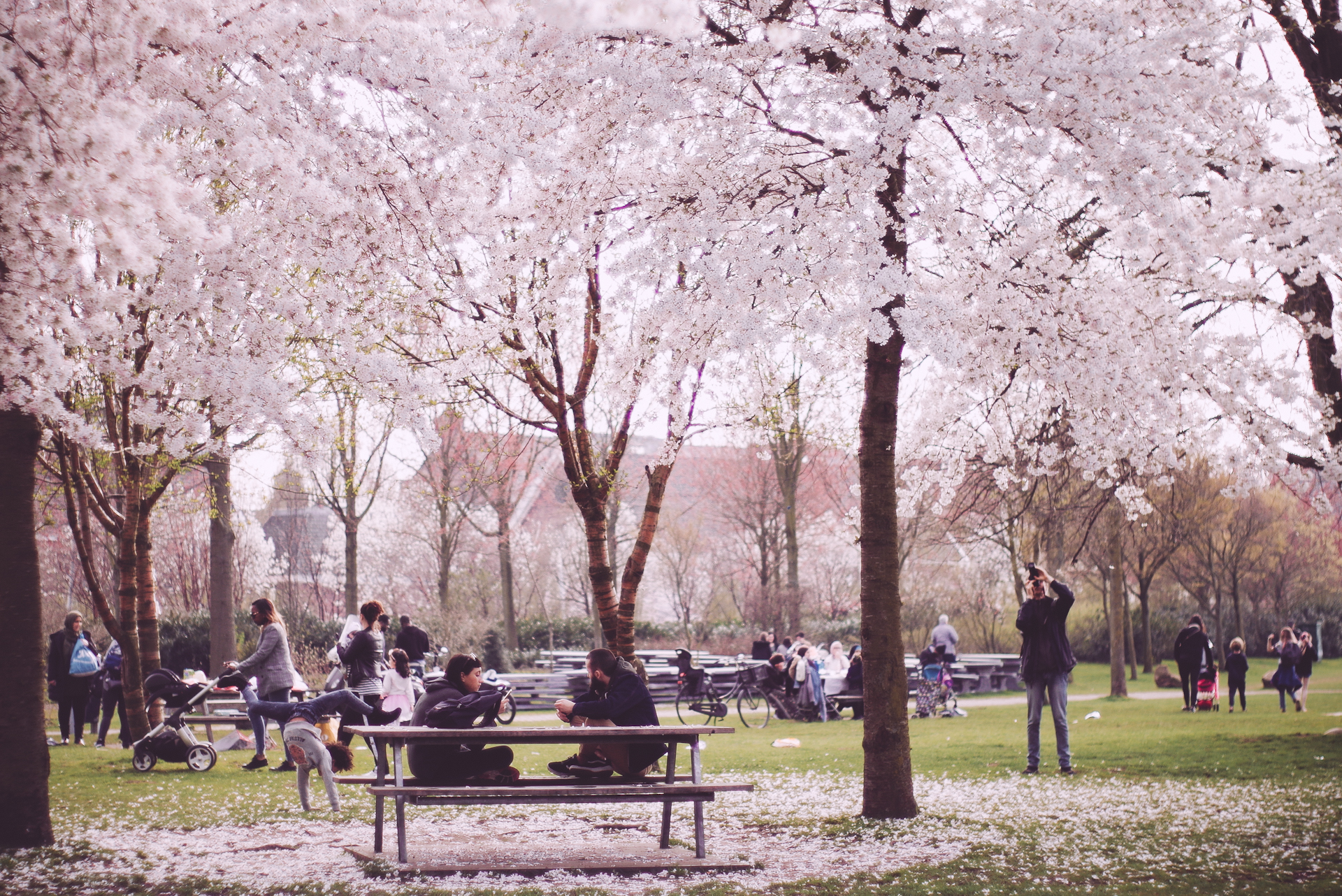 2018 APR Amsterdam Cherry Blossom Pink le-12.jpg