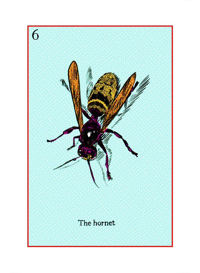 06 The Hornet.jpg