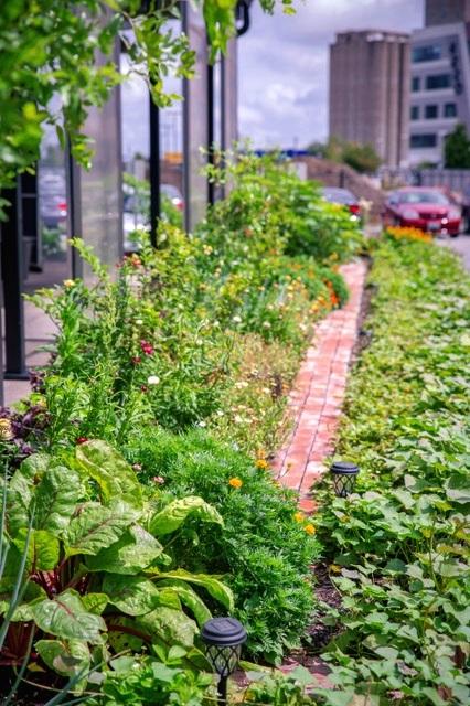 vicia garden.jpg