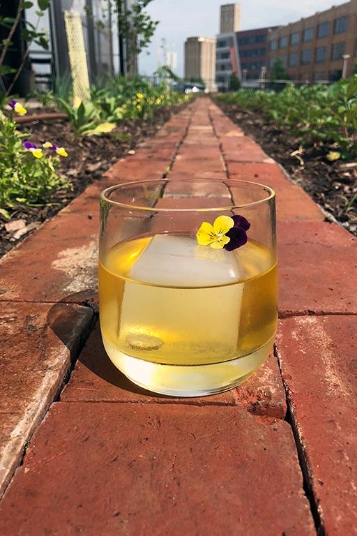 vicia glass-sm.jpg