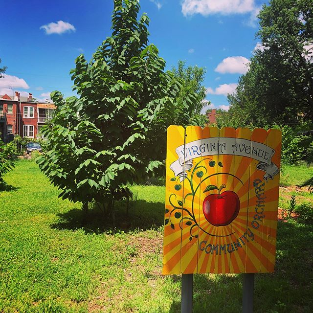 So inspired by the work of the Virginia Ave Community Orchard.  May orchards begin to be as popular as community gardens.  #communityorchard