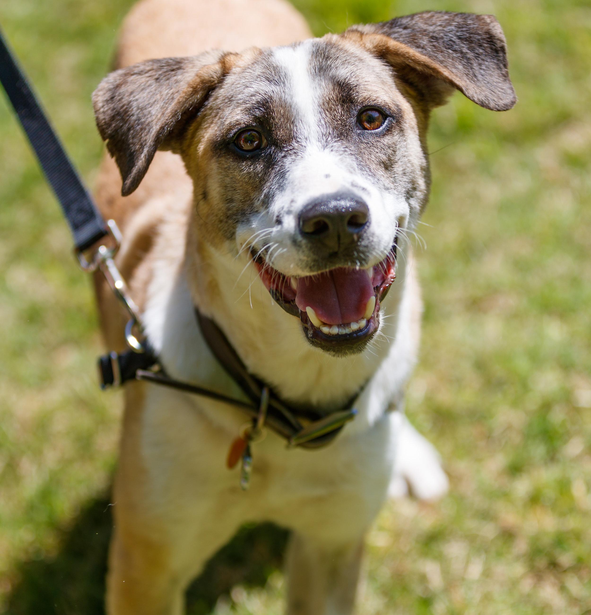 2018 Legacy Park Dog Walk and Wellness Fair