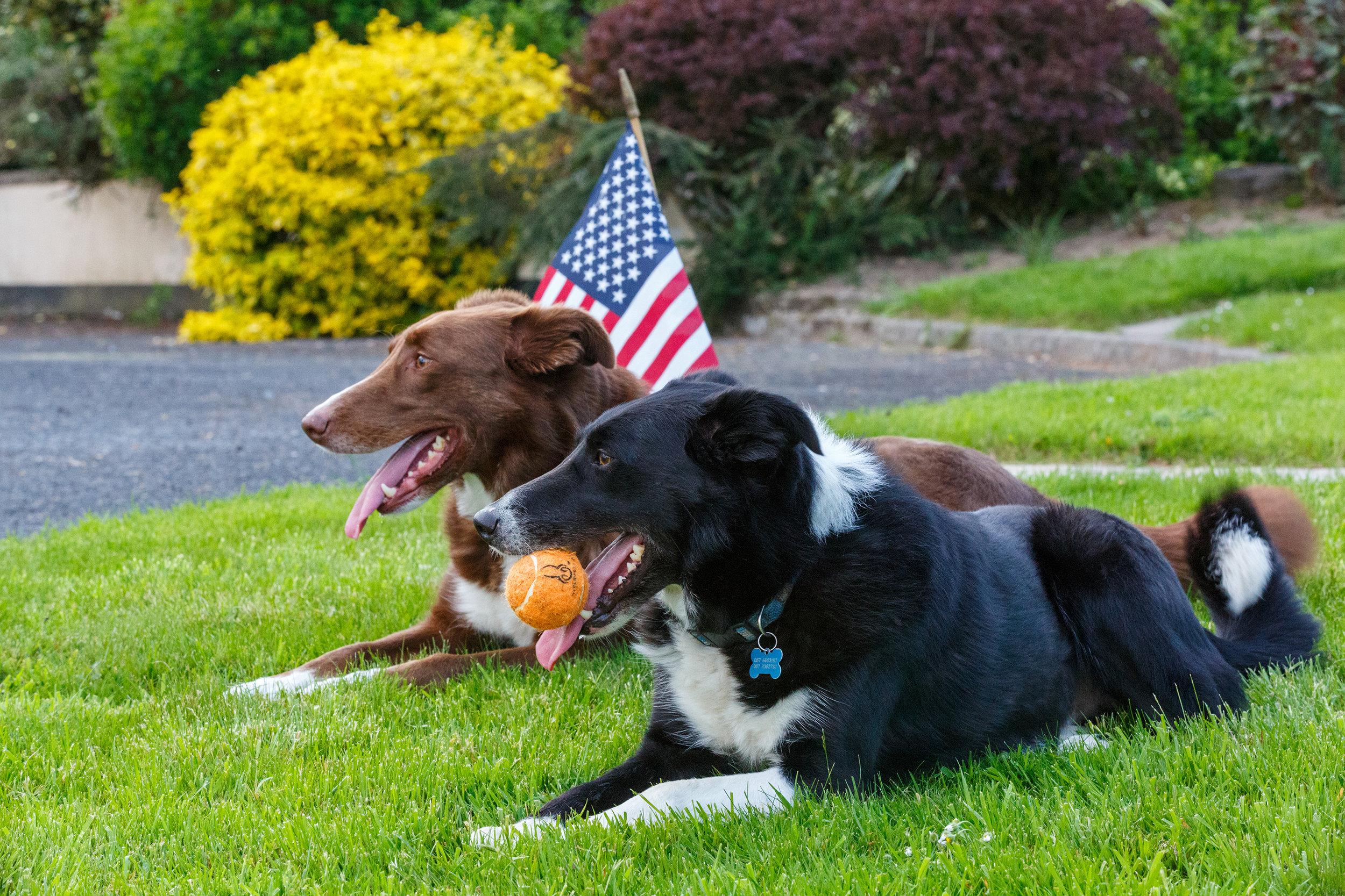 2016 Gleeson Dogs 246.jpg