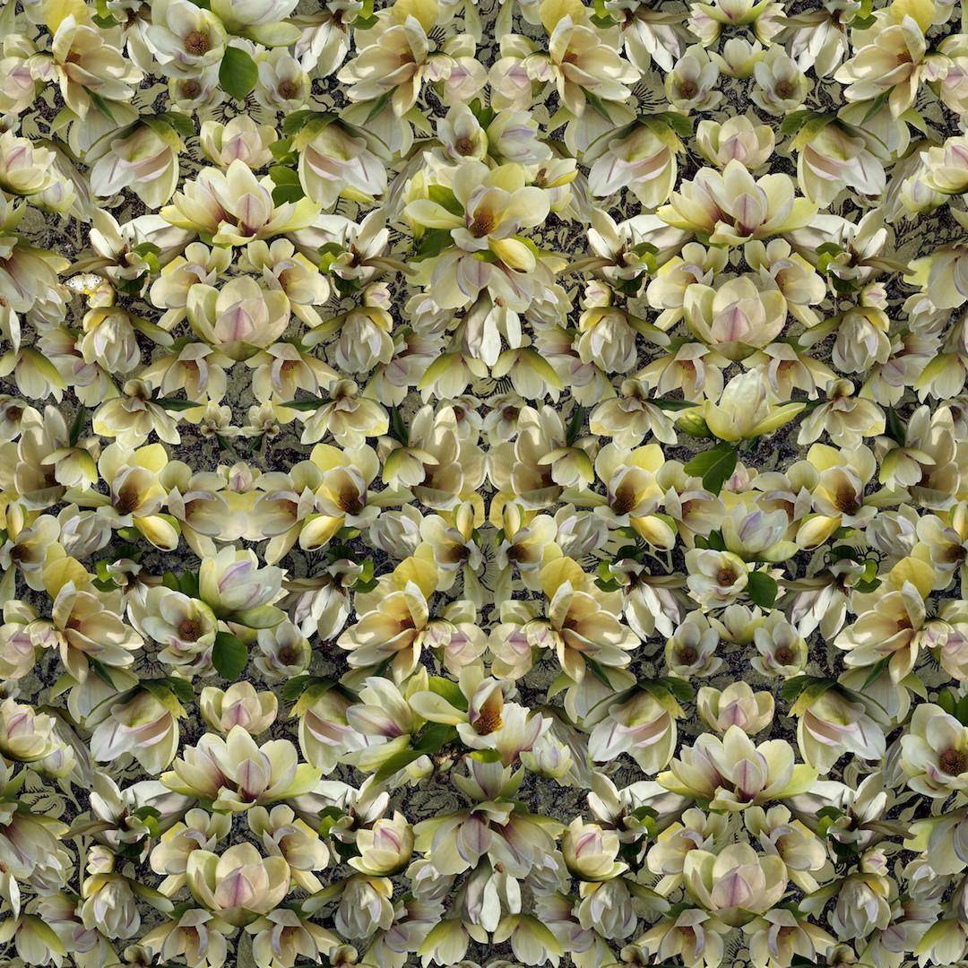 frank_magnolias_breaking_pattern.jpg