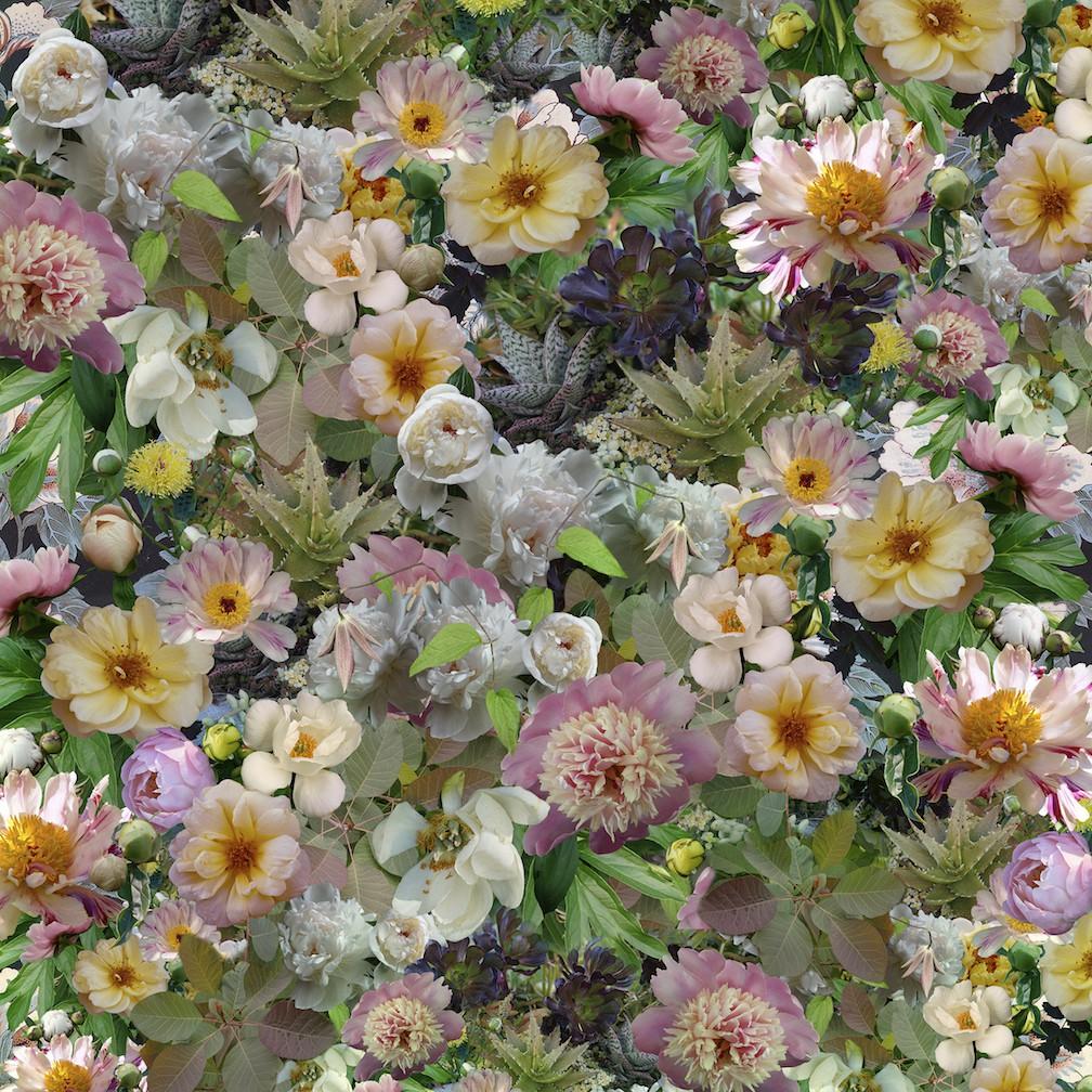 frank_peonies_breaking_pattern_40_x_40_digital_photography.jpg