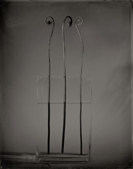 preuss_fiddle_heads_8x10_wetplate_collodion_tintype.jpg
