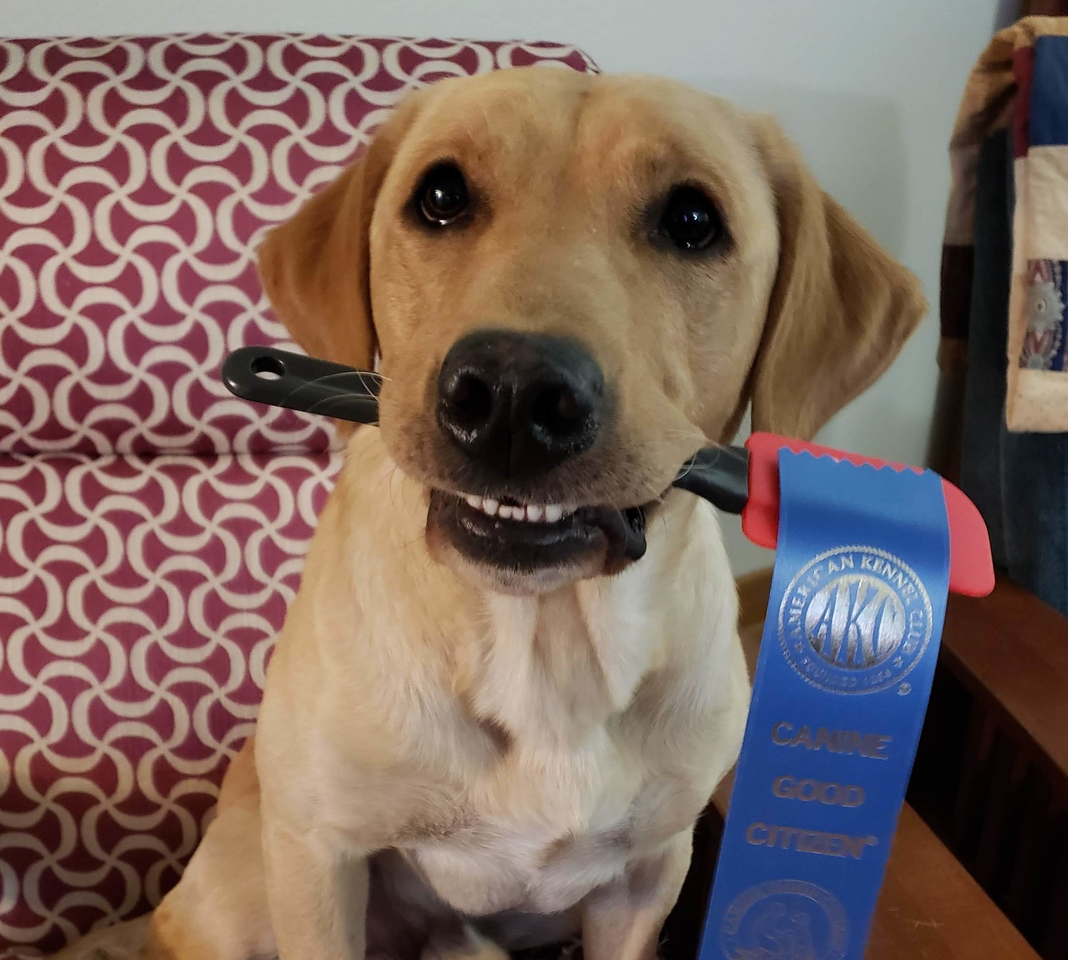 Fisher proudly showing off his ribbon!