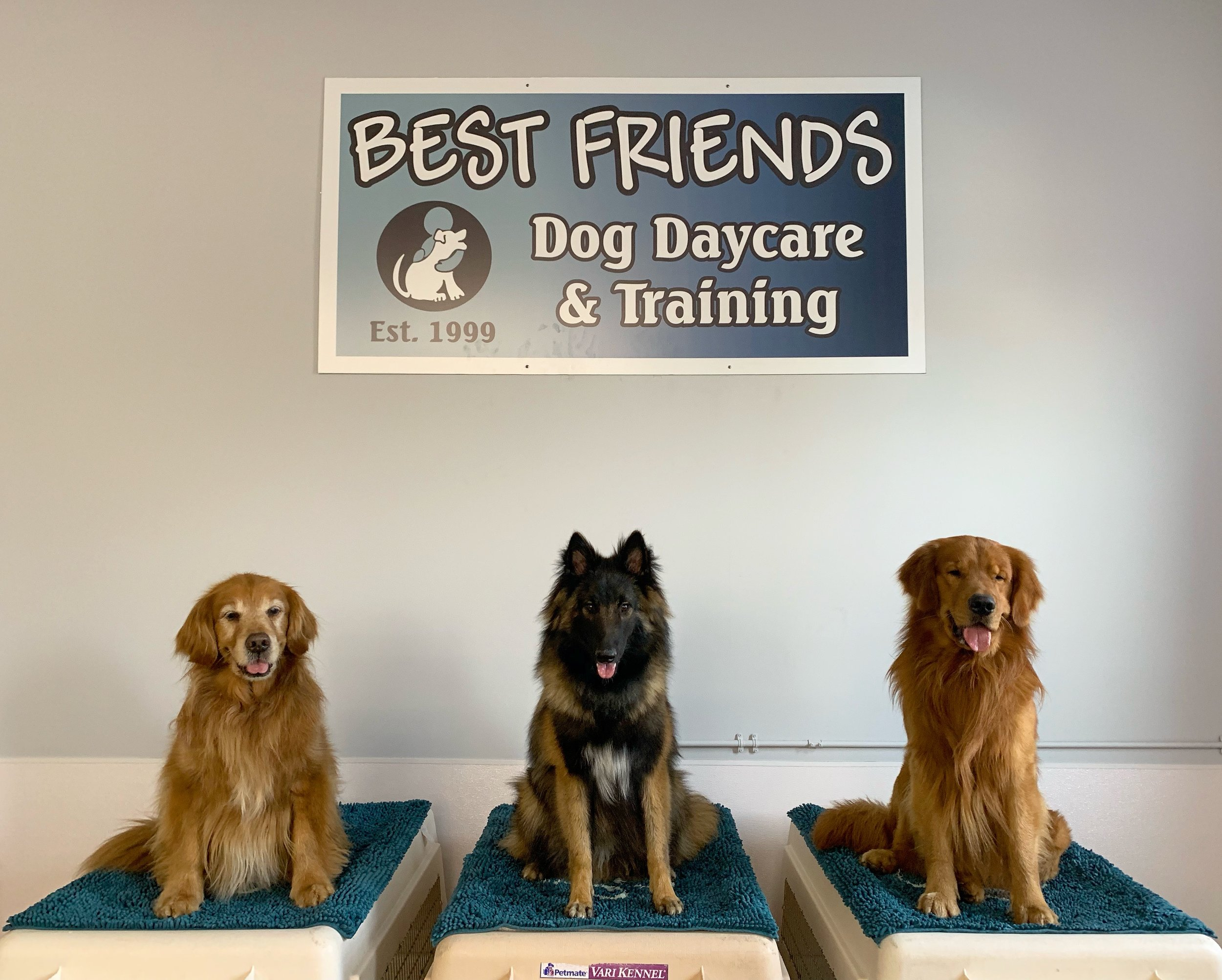 doggy daycare rates - Full day $26 *** 2nd dog full day $174 hour stay $175 hour stay $19Nail Trim $10Pick up/drop off $10 per trip