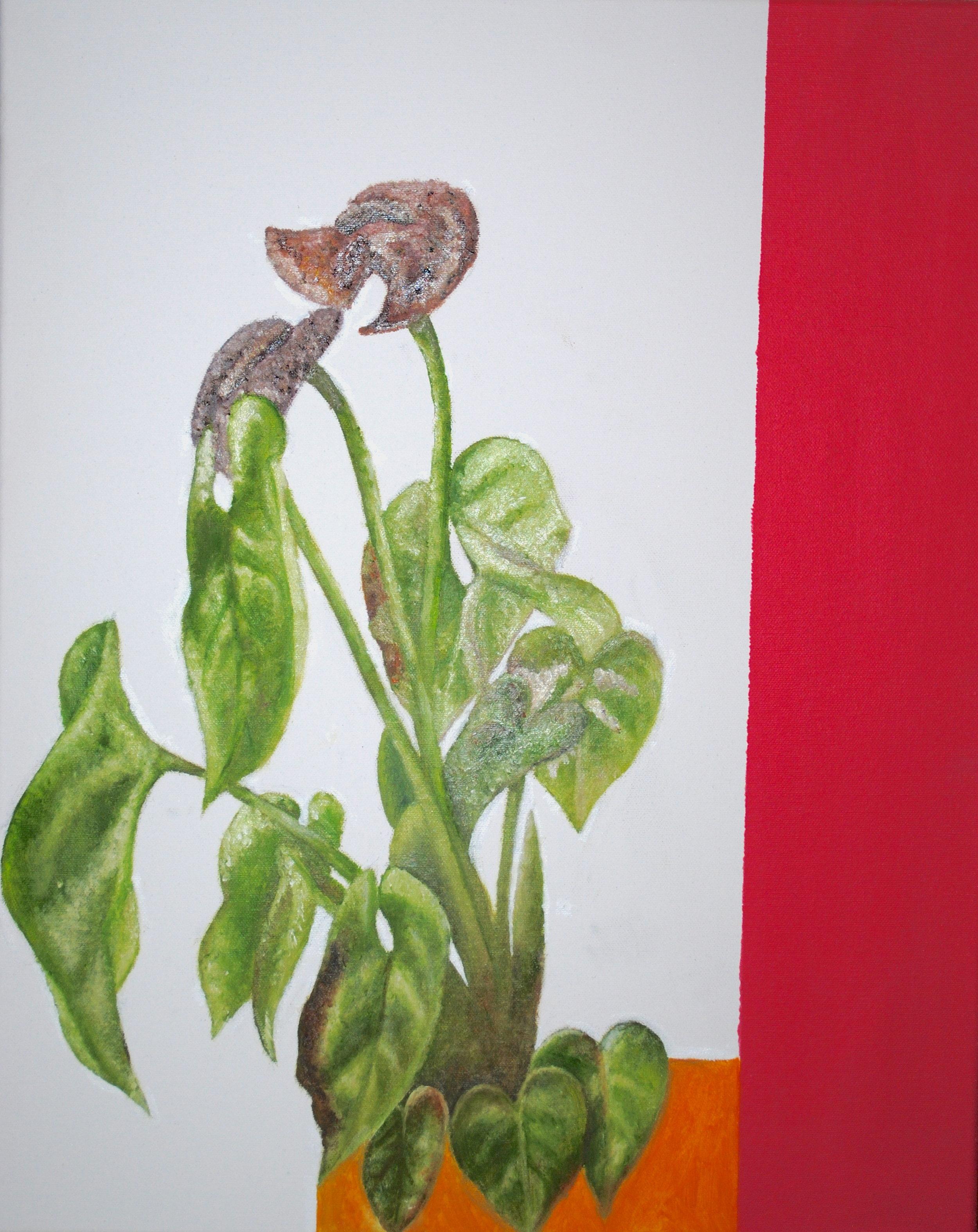 Plants (2018)