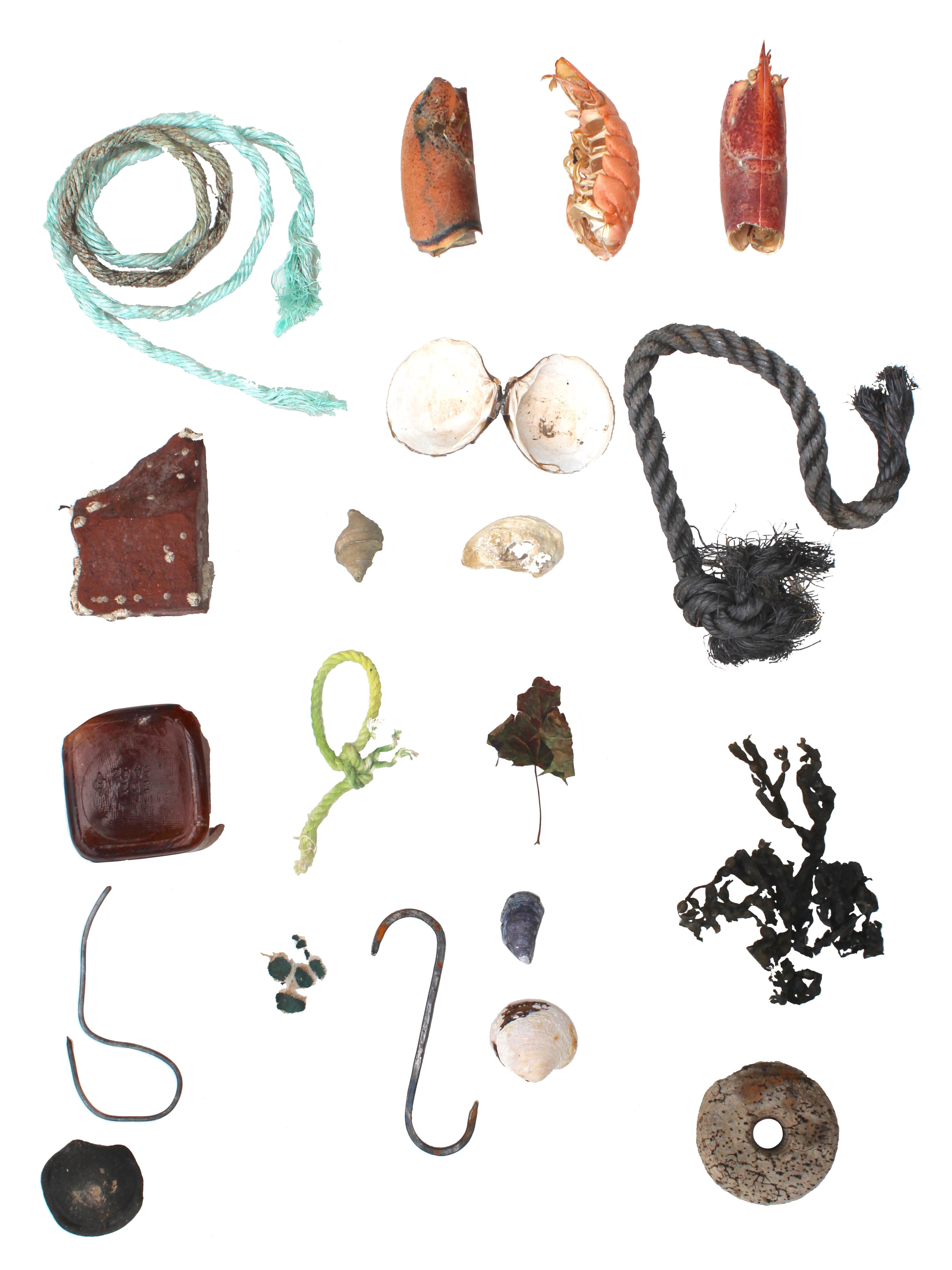 Objects of Land and Sea, digital print on paper, 21.5 x 17 inches, 2016
