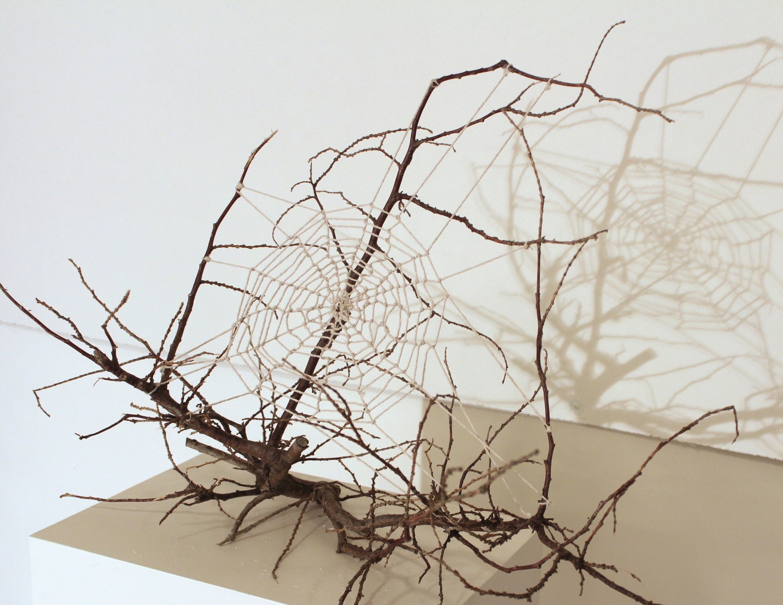 Spider Web, tree branch and cotton rope, 12 x 10 x 10 inches, 2017