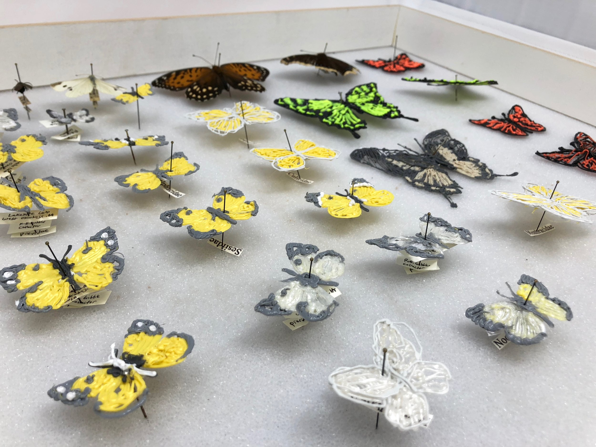 Insect Chart-1, 3D-printed plastic, steel pins, paper labels with ink, 12 x 17.75 x 2.5 inches, 2018