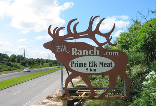 Directions - The ElkRanch (& shop) are about 5 km from HWY 417: Take exit # 138 and turn right onto March Road. Follow the ElkRanch signs… eventually turning onto Old Carp Road (from Halton Terrace).
