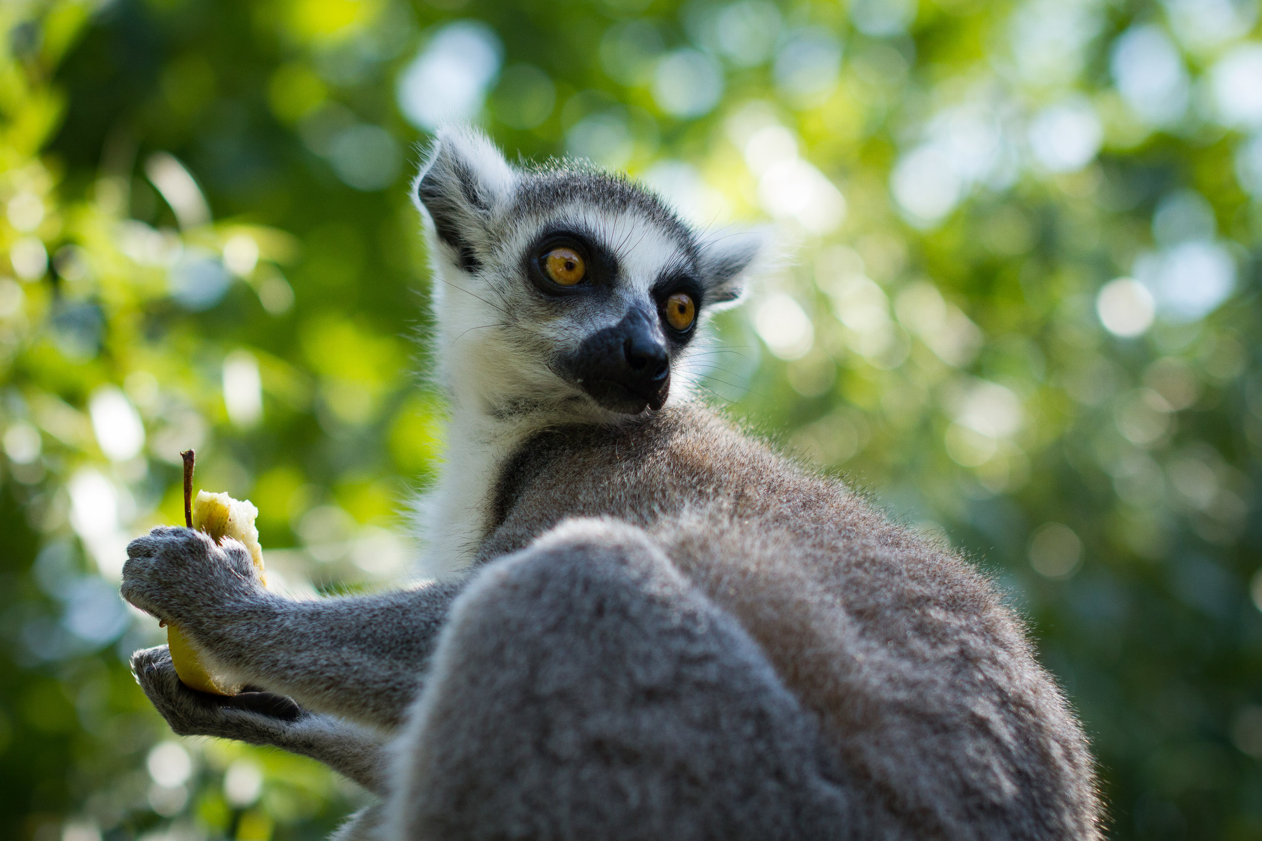 Lemurs and Beaches in Madagascar - Madagascar is easily one of the most far-flung destinations on the globe. This is a remote land where lemurs dance through lush rainforests, electric orange chameleons prowl along prickly branches, opportunities abound to get the perfect shot of a baobab tree at sunset, sundowner in hand, enjoying authentic dancing and singing with the local tribes around a raging fire.