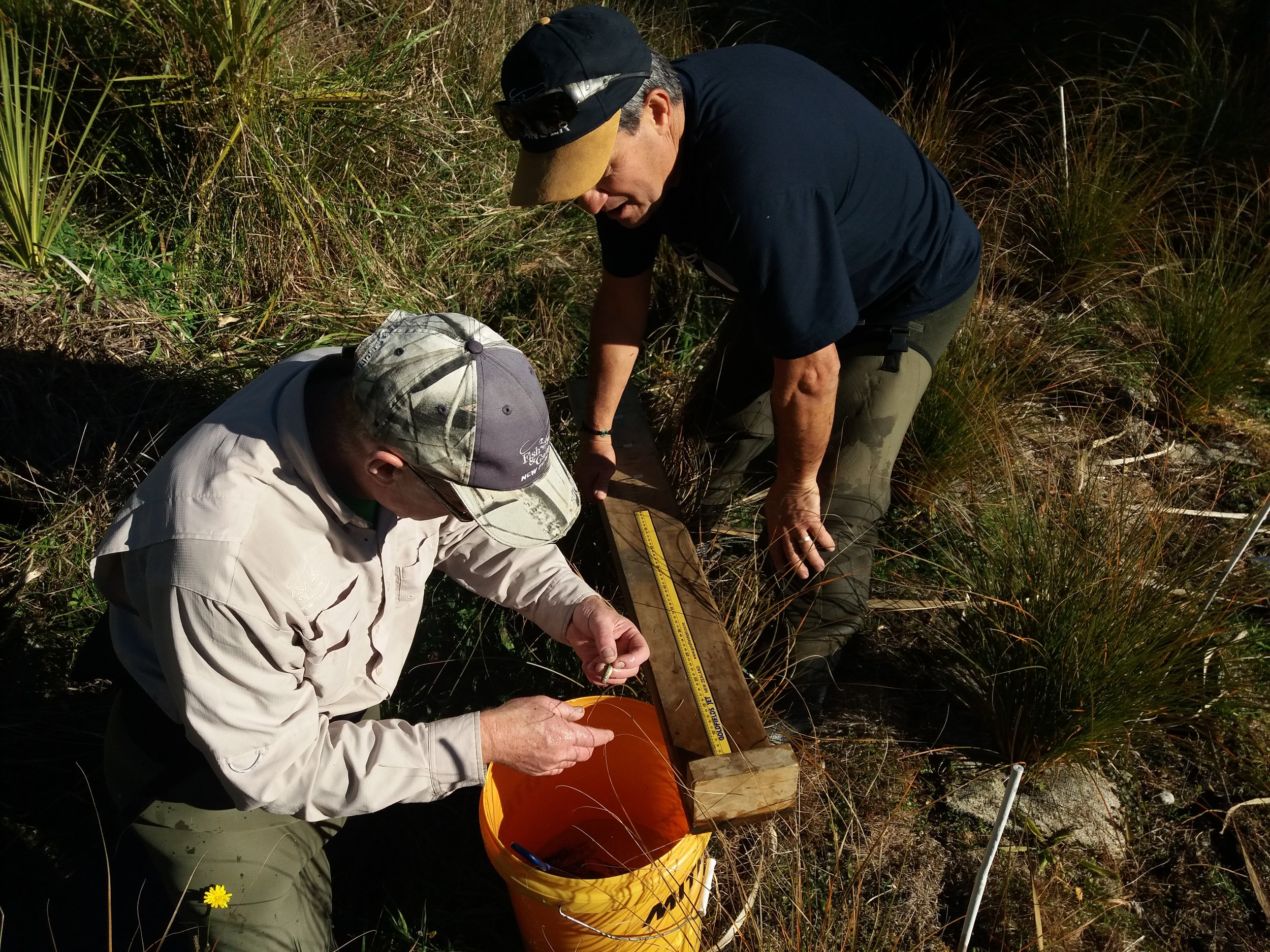 Measuring fish specimens.jpg