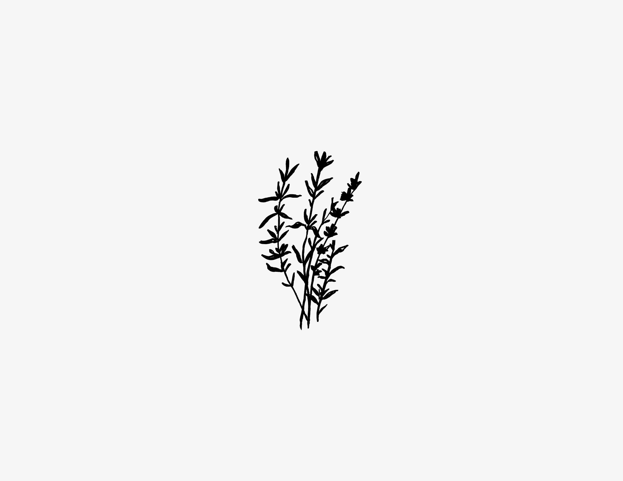 LeonardFarm_Herb1.jpg