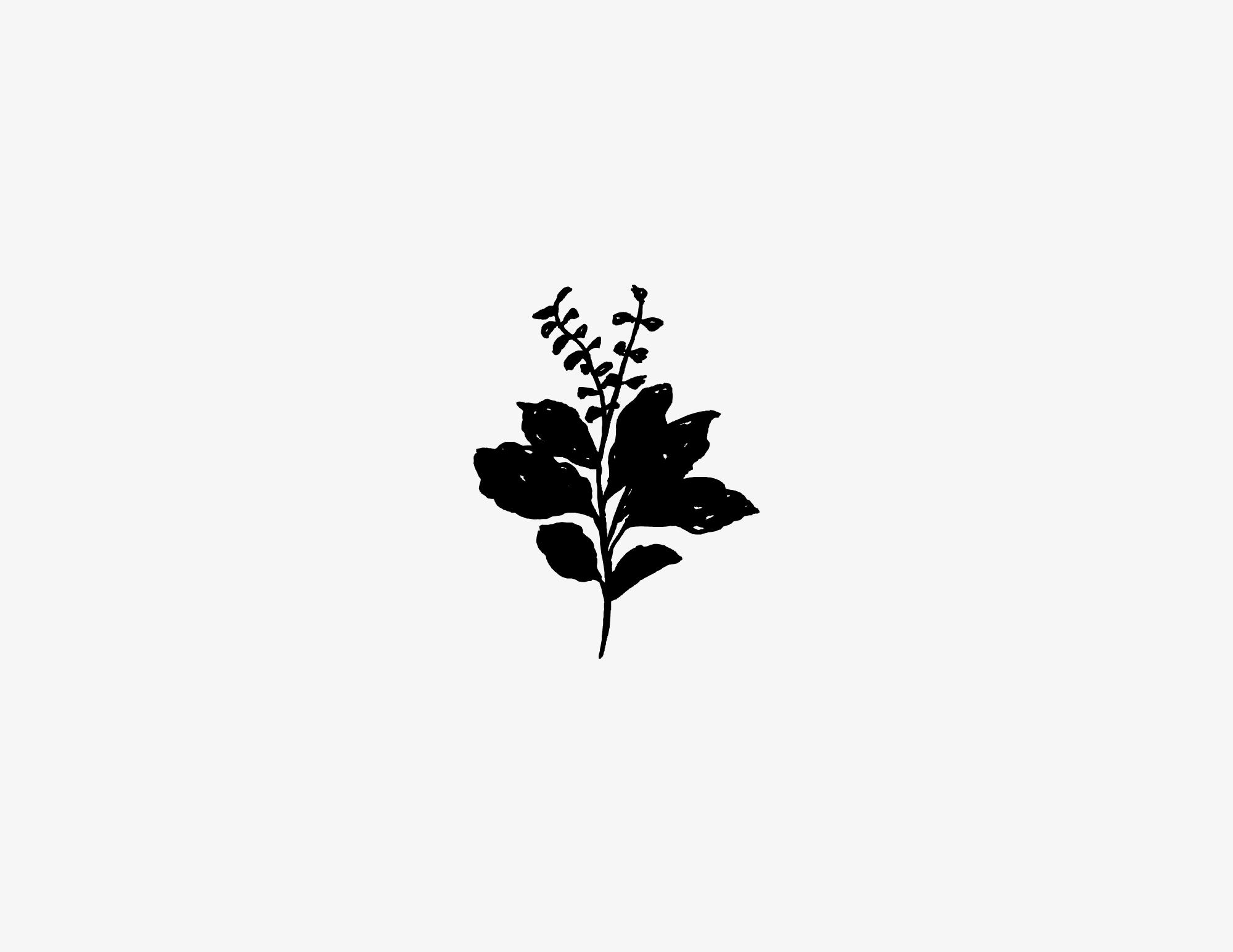 LeonardFarm_Herb4.jpg