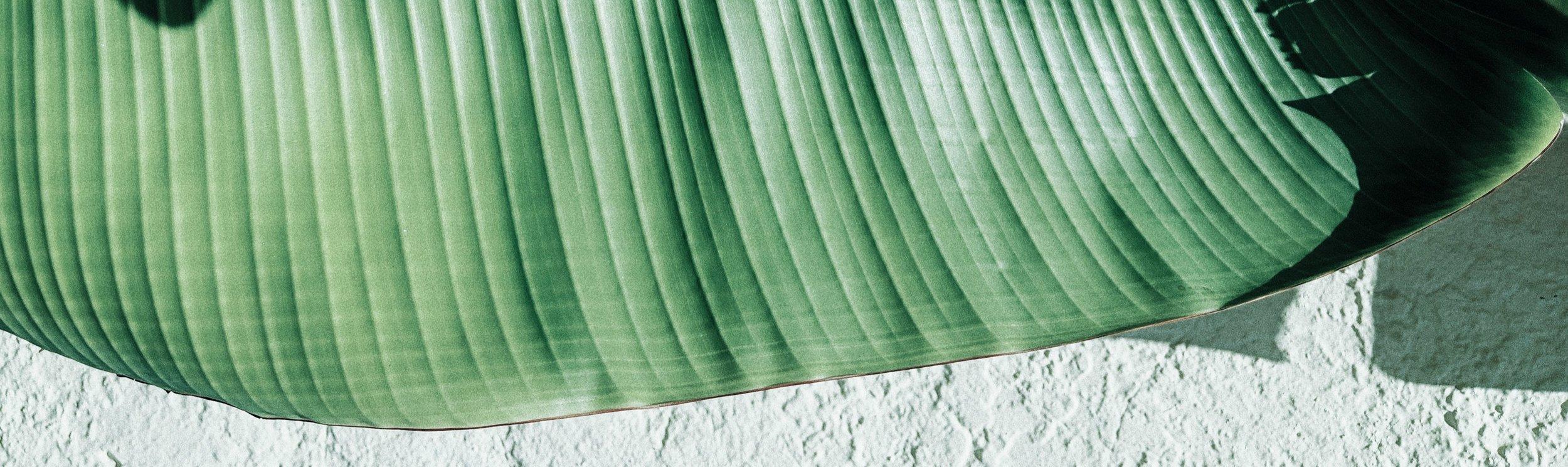 Palm+01-Home-Banner.jpg