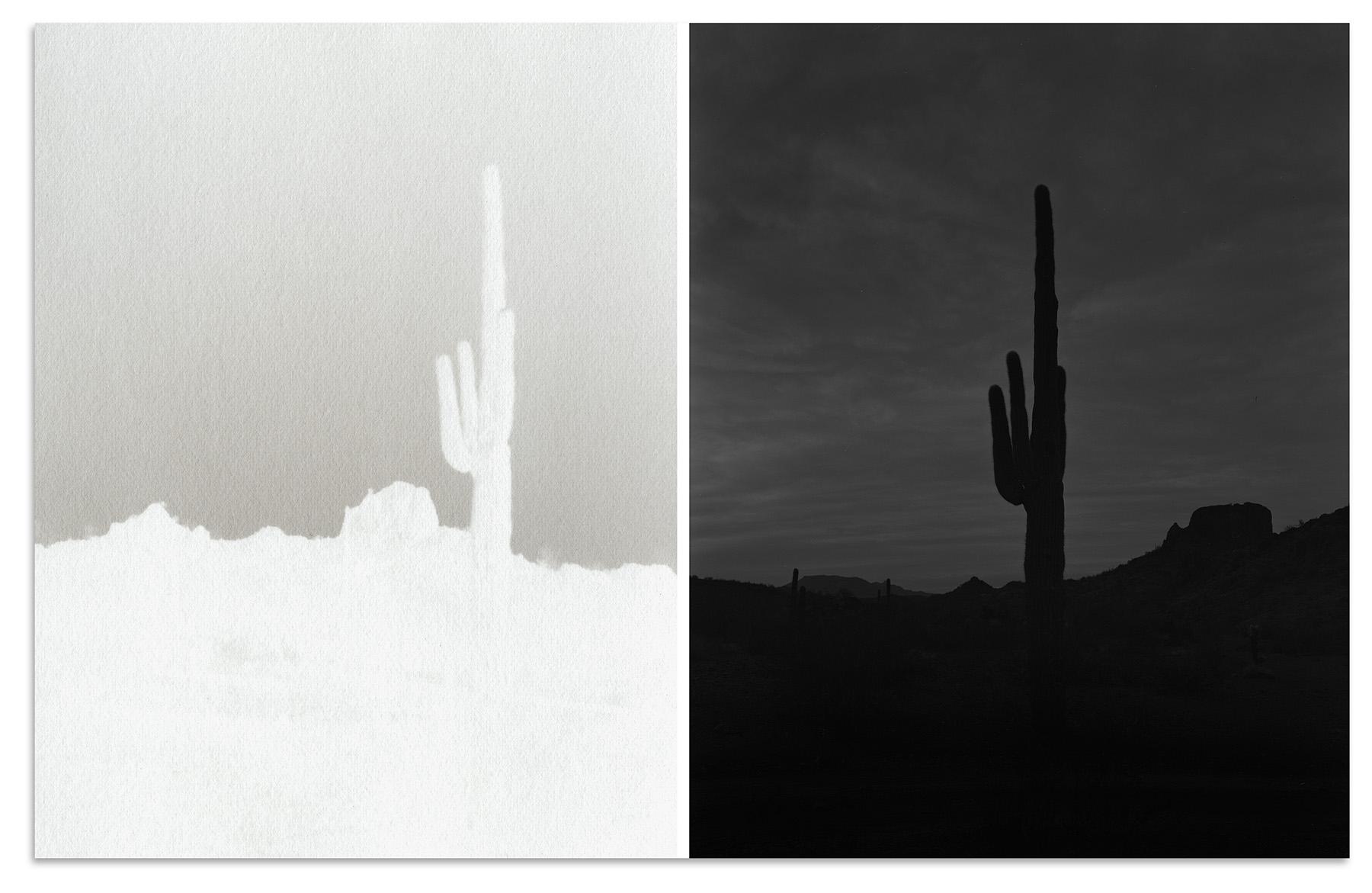 saugaro among volcanic landscape, new water mountains, arizona, 2018
