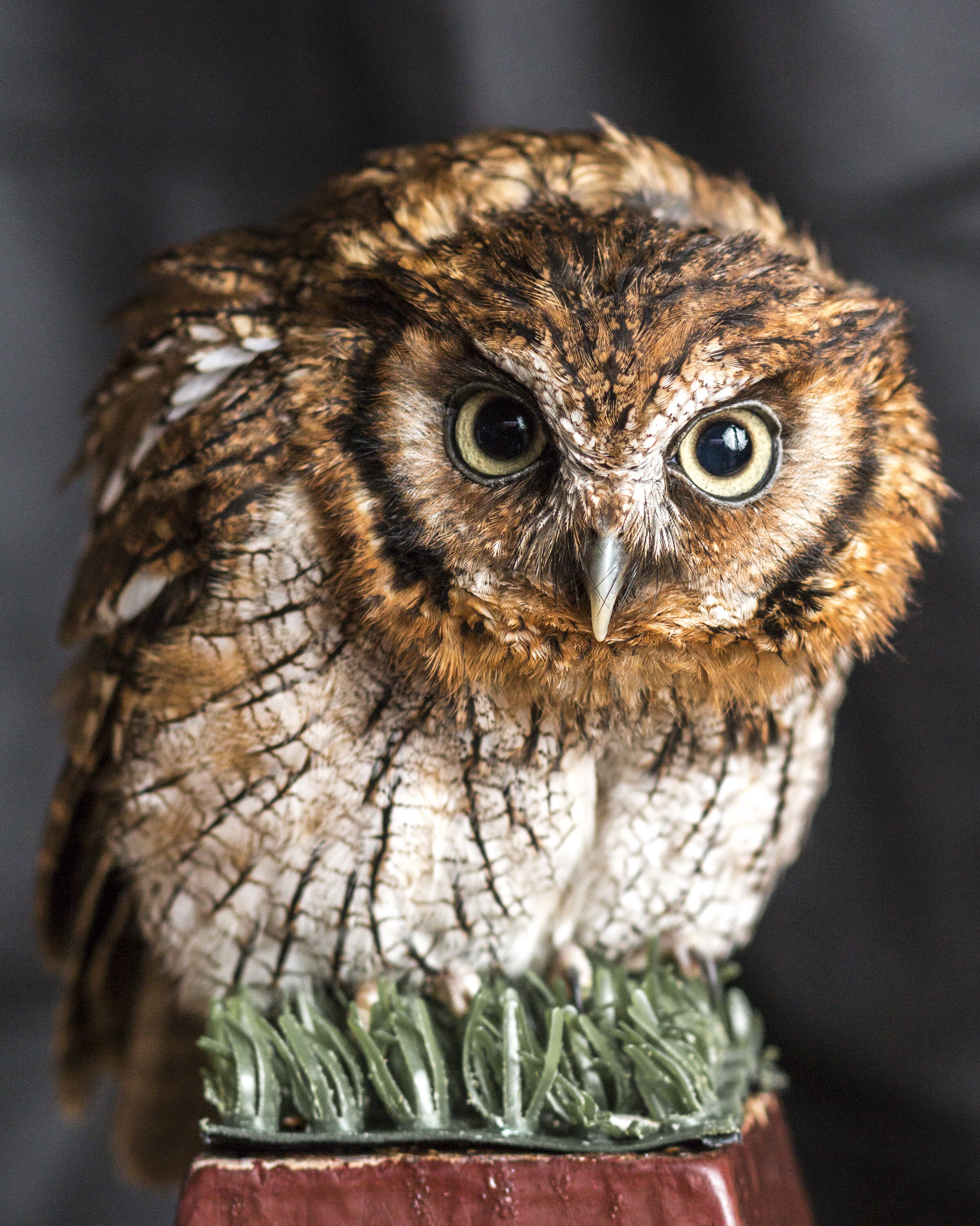 Owls - A wise old Owl sat in an Oak: The more he saw the less he spoke; The less he spoke the more he heard; Why can't we all be like that wise old bird? (Anonymous)