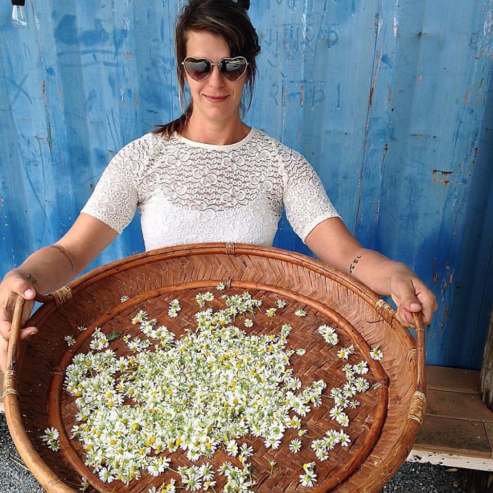 Chamomile Harvest Whitney Dane.jpg