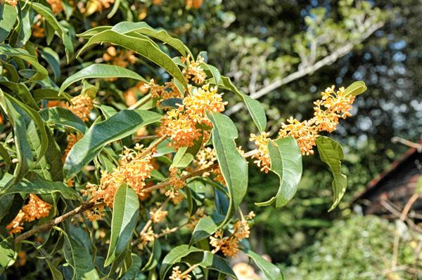 Orange-Flower.png