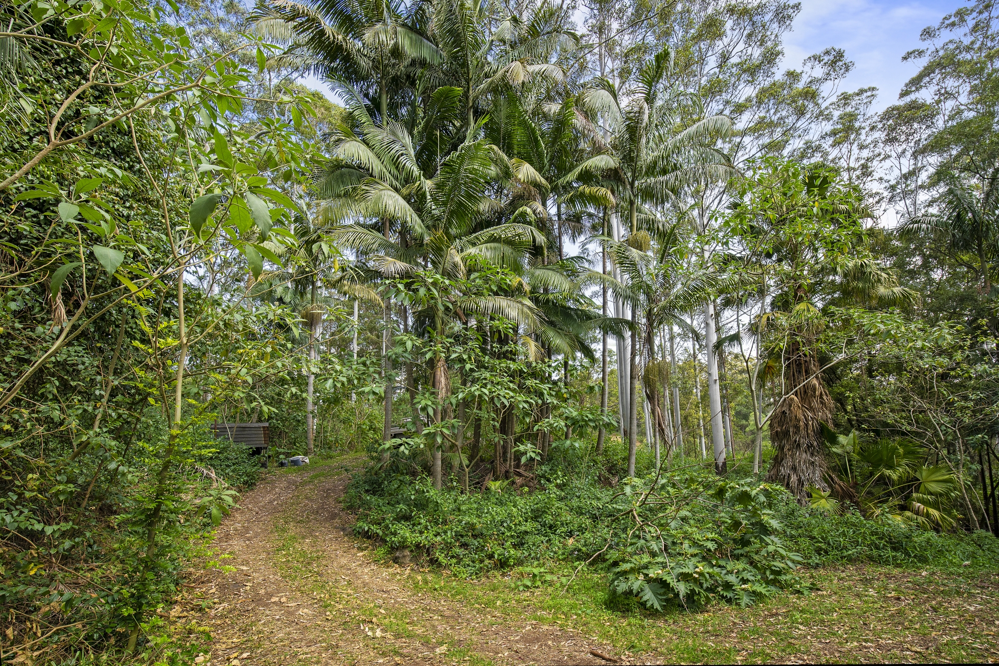 25. Rainforest.jpg