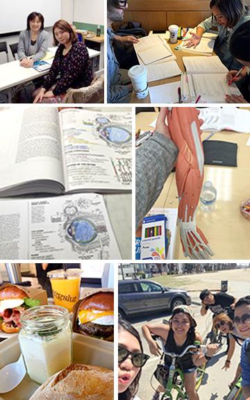 写真左上から時計回りに: 1. 2014年4月に、日本でAzusaさんと初めてカウンセリングを行いました。 2. 解剖学の授業でテストのために、みんなで勉強しました。 3. Teas-V対策のための、チューターリングを受けました。 4. 語学学校の友達と、ベニスビーチへサイクリングしました。 5. お気に入りのダウンタウンのカフェにある「エッグスラット」です。 6. Teas-Vの勉強中です。とても難関のテストのため、なかなか合格点にいきません。
