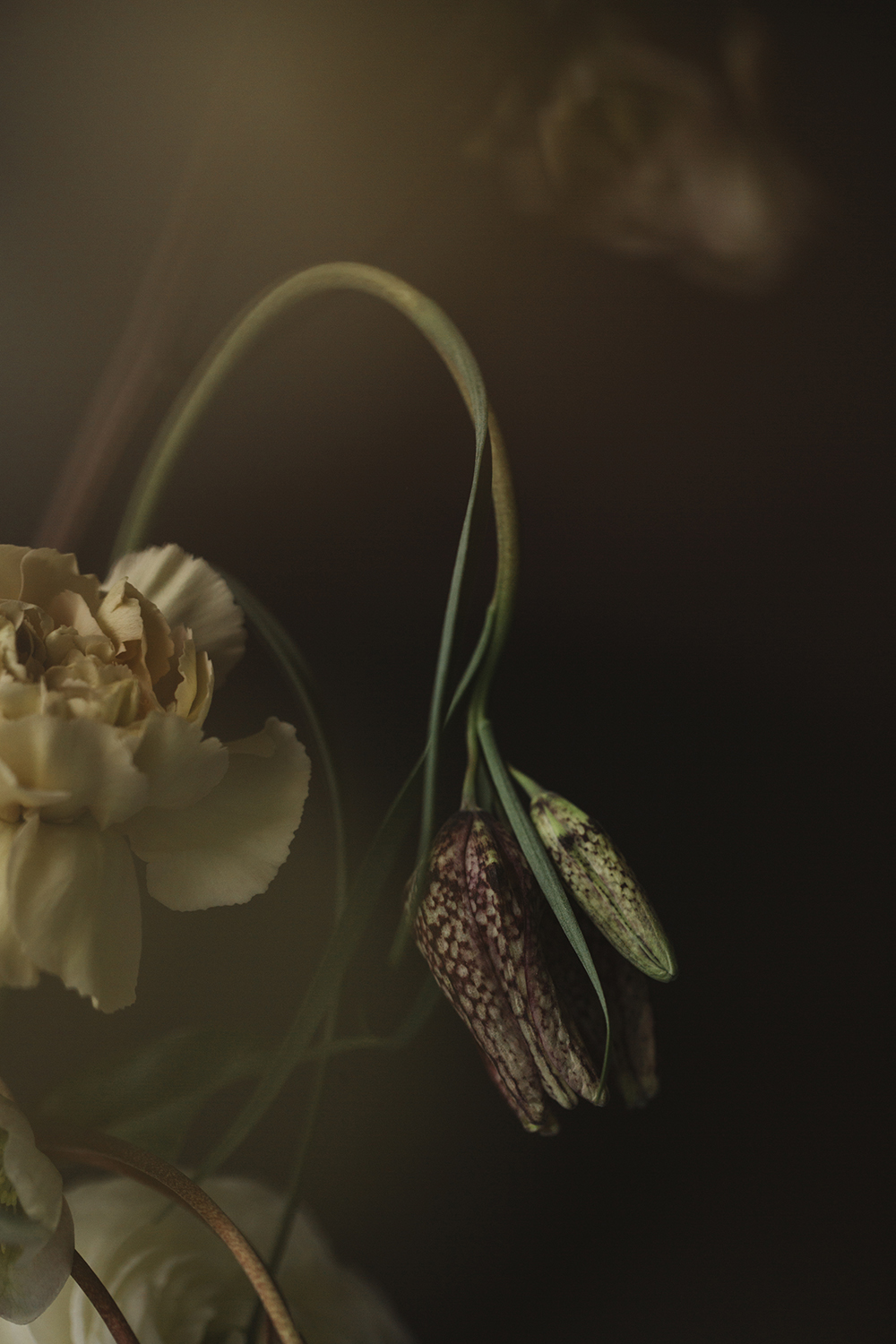 Collaboration with floral artist Emily Ayres -  Design by Nature