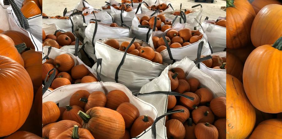 Pumpkin-900x444.png