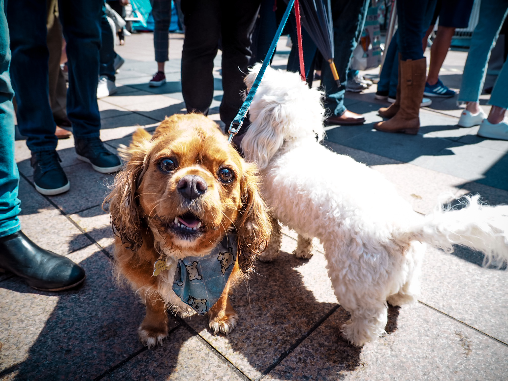 Dog at Coventry Food Festival 2019