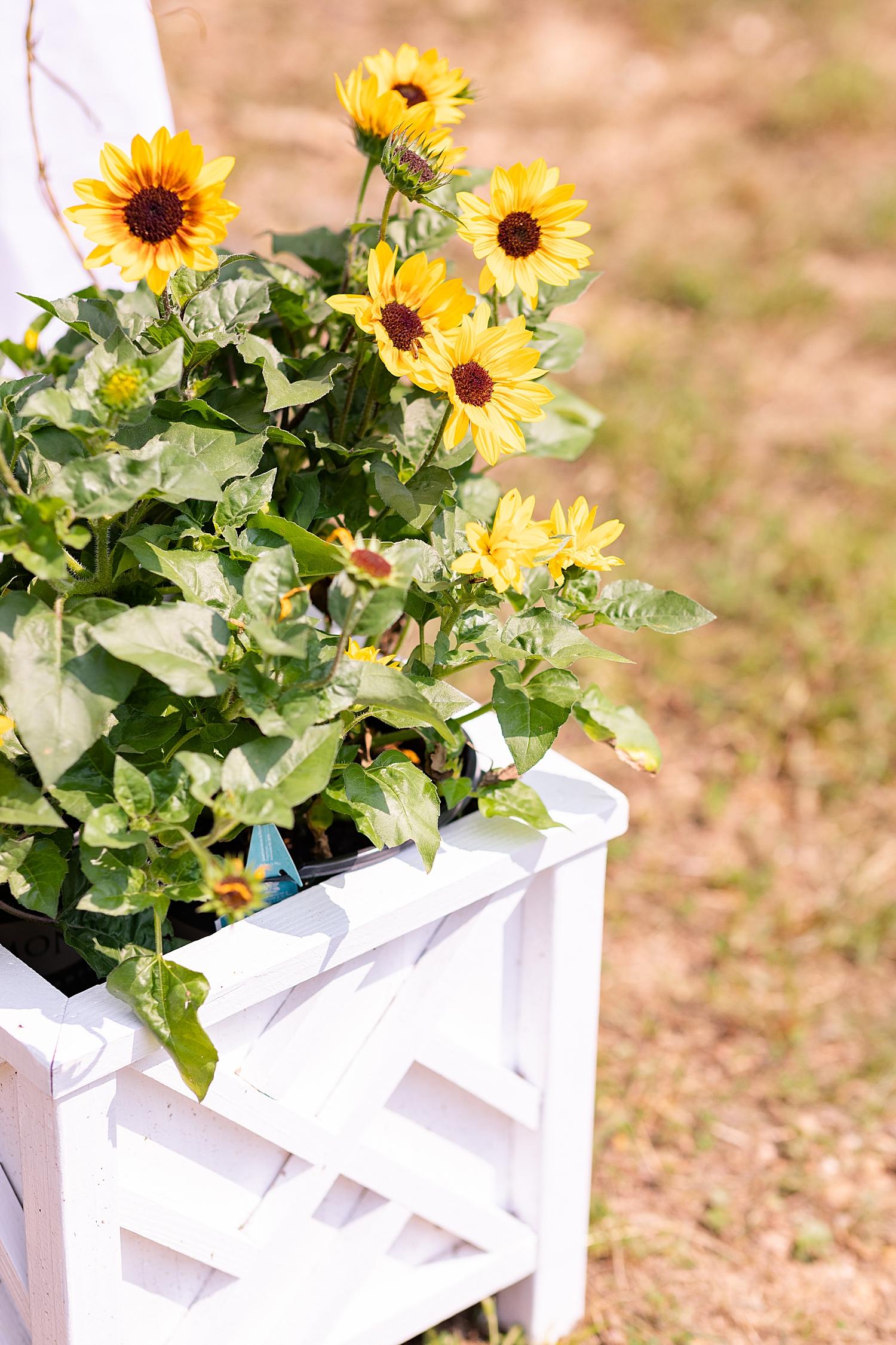 Intimate Spring Virginia Wedding Photo_0855.jpg