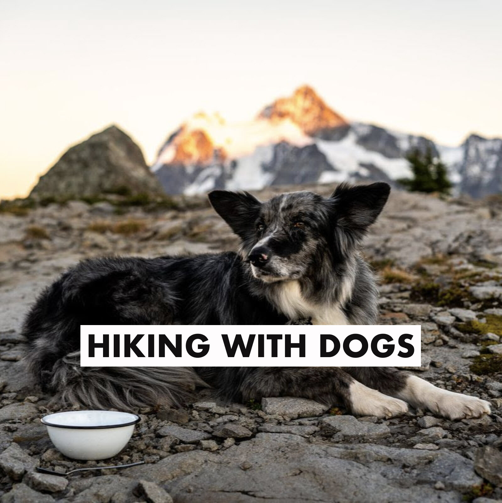 hiking with dogs.jpg