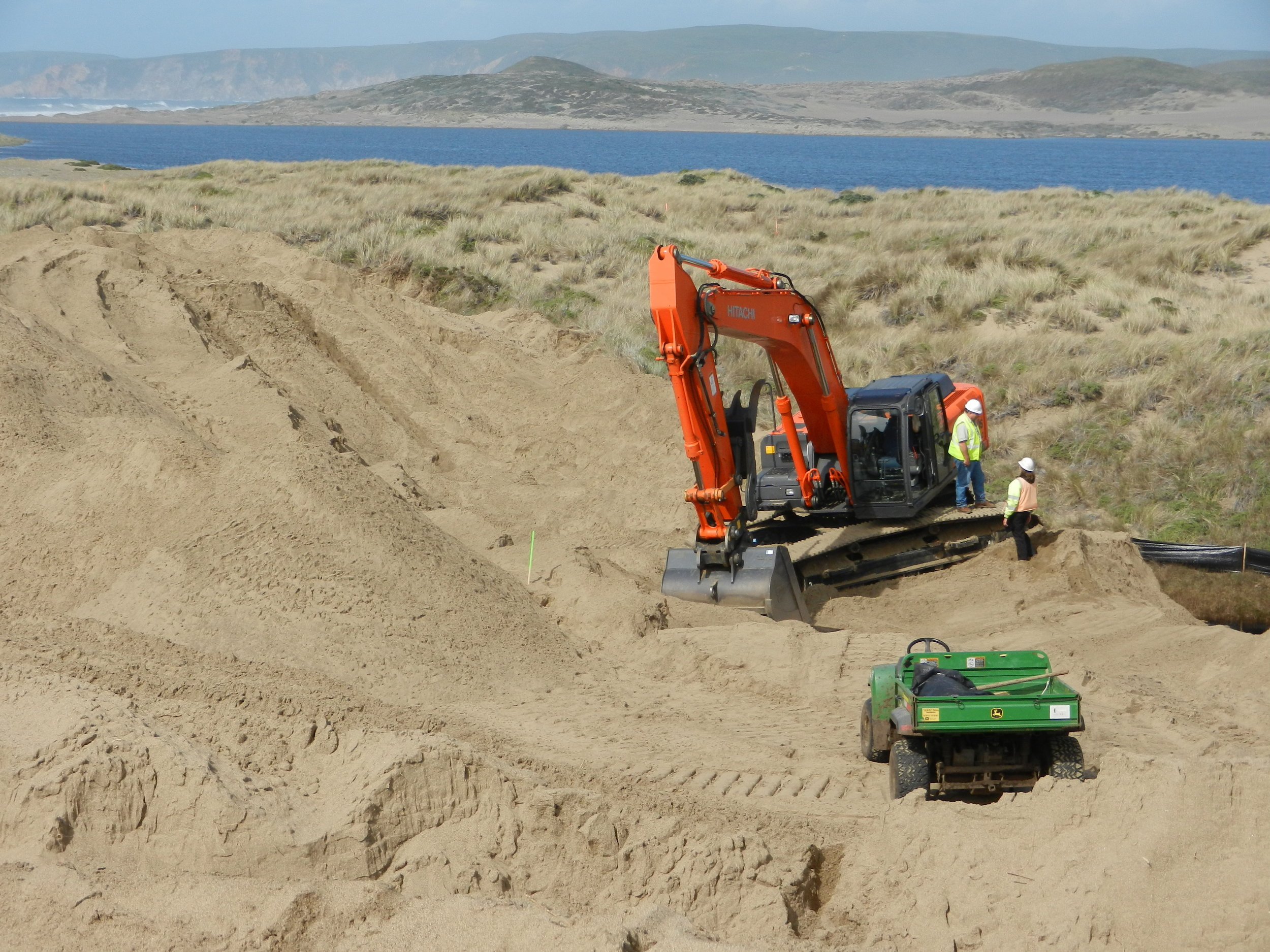 RESULTS - Though the project scope was essentially invasive species removal. The approach resulted in a project that was primarily large-scale excavation. To remove and bury the European beachgrass, Hanford excavated approximately 1,000,000 CY of sand. Six, 22-30-ton excavators, three D6-D8 size bulldozers and two track trucks (one dedicated to fuel delivery) were required to operate full time to maintain an average production rate of approximately 8,000 CY/day of excavation over the 6-month project.The massive task of flipping the large coastal dunes resulted in a significant reduction of European beachgrass thatch and seedbank which allowed the native plant diversity to establish.