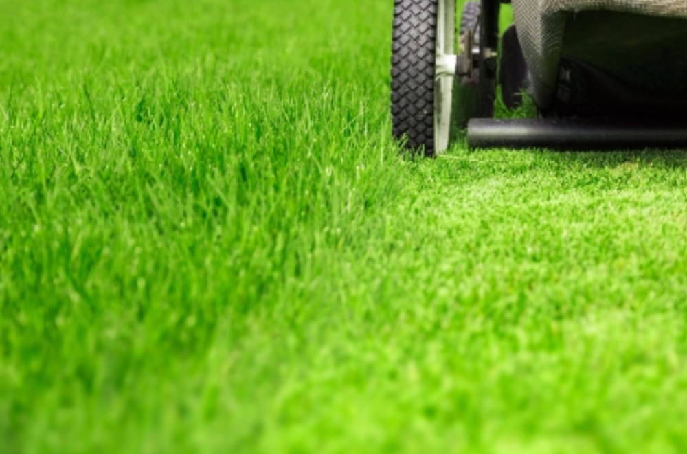 Fresh-cut grass can make you more joyful -