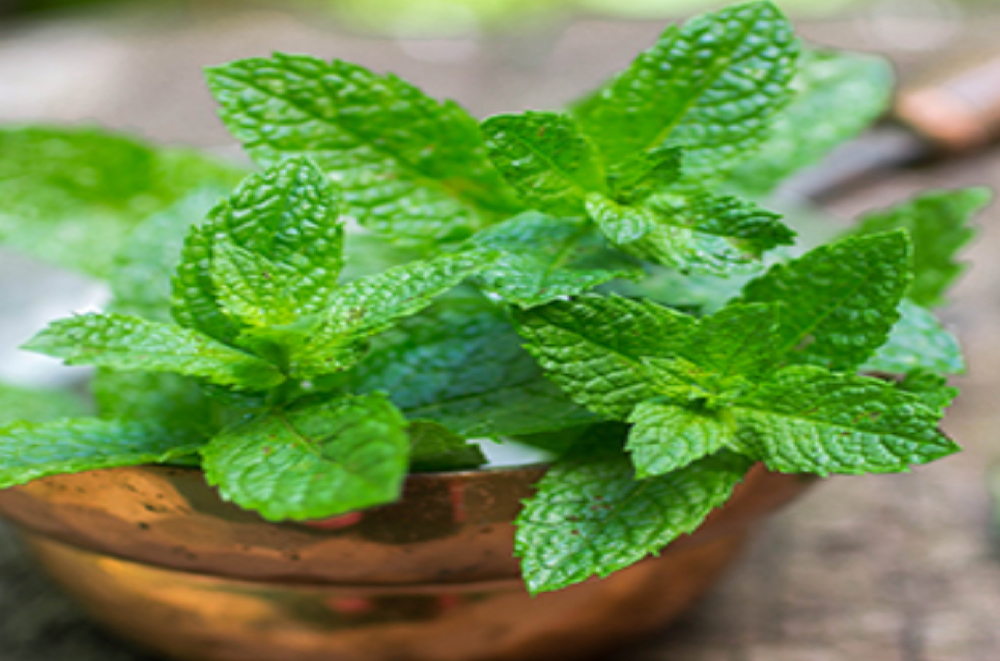 Peppermint may boost concentration -