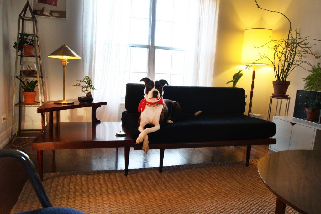 livingroomdog1-1024x683.jpg
