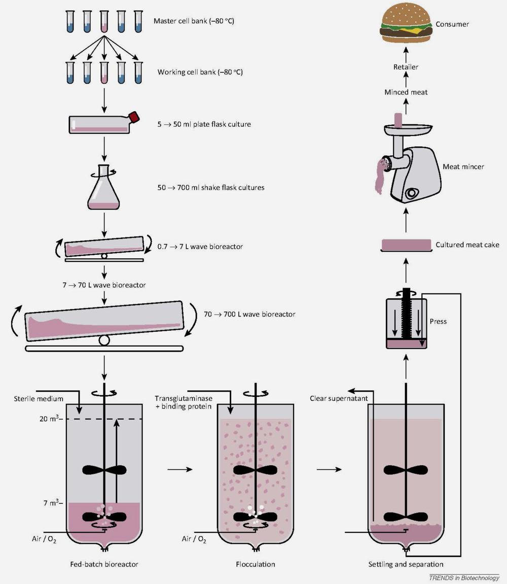 source- Trends in Biotechnology, van der Weele et al.
